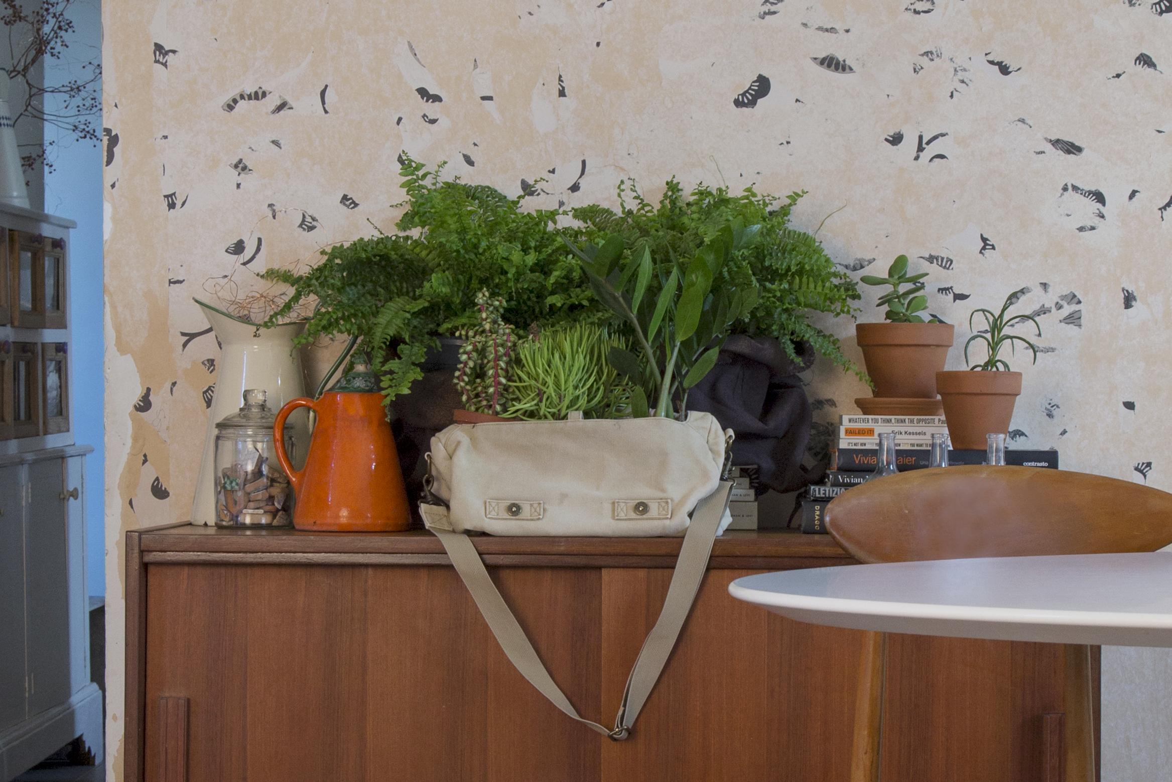 piante, indoor, verde, casa