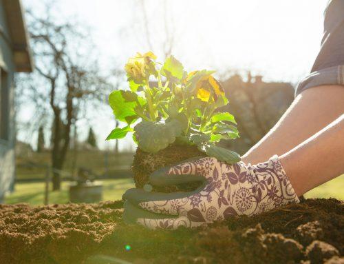 Gardening come terapia